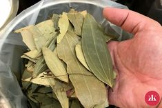 Bay Leaves, Plant Leaves, Roses In Potatoes, Herbal Remedies, Natural Remedies, Low Platelets, American Diabetes Association, Types Of Diabetes, Natural Treatments