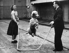 Fotos del circo vintage