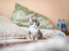 Cute Kittens, Cats And Kittens, Tabby Cats, Small Kittens, Siamese Cats, Dog Sleep, Kitten Images, Grey Kitten, Cornish Rex