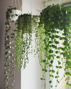 - House Plants - Most Hot Hanging Plants Ideas at the End of the Year You can after that hang planters from freestanding hooks to ensue a bit of zenith to your garden beds or dangle flower pots from a large tree in your yard. Garden Care, Garden Beds, Herb Garden, Garden Bedroom, Balcony Garden, Nature Bedroom, Big Garden, Spring Garden, Vegetable Garden