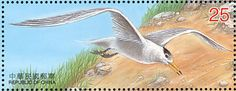 Chinese Crested Tern stamps - mainly images - gallery format