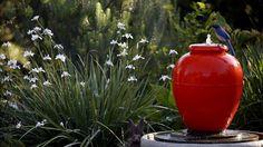 Peggy Casey's Altadena garden
