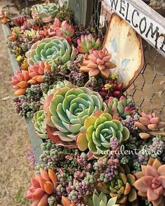 How To Use Succulent Landscape Design For Your Home Water Wise Landscaping, Succulent Landscaping, Succulent Gardening, Succulent Terrarium, Planting Succulents, Garden Landscaping, Landscaping Ideas, Colorful Succulents, Growing Succulents
