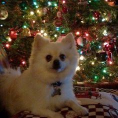 Jasper, Christmas 2011