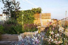 Adolfo Harrison Gardens | REGENTS PARK VIEW