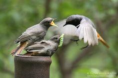Basics on photographing birds
