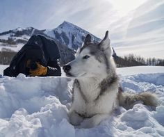 Going undercover with @mspfilms and @rexlint #mbphotopass by loki_the_wolfdog