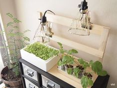 LED 水耕栽培 自作 DIY おしゃれ かわいい インテリア 木材 電球 照明用 栽培用 植物育成 電気 普通の