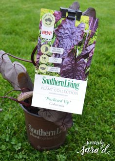 Create a Patio Oasis with Southern Living Plants - Sincerely, Sara D. Lemon Lime Nandina, Recycling Activities For Kids, Outdoor Projects, Diy Projects, A Little Life, Yard Care, Unique Plants, Southern Living, Container Gardening