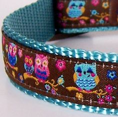 Owl dog collar. So cute!