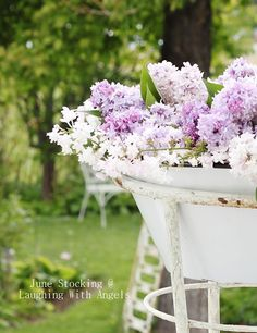 Jewels from the garden Lavender Cottage, Lavender Fields, Narcisse, Lilac Flowers, Purple Lilac, Garden Inspiration, Old World, Outdoor Gardens, Bouquet