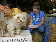 A Day in the Life of National Mill Dog Rescue