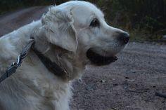 Gårdstunet Hundepensjonat: En flott søndag med hunder som koser seg i det dei...