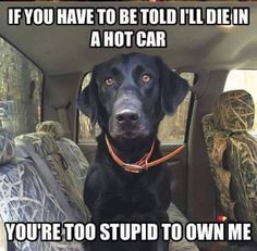 I cry looking at these, in a car the interior temp go up be an extra 30-40 degrees. Enough to fry a dogs brain. Dogs only sweat through the pads of their feet, relatively little area, compared to the size of their bodies.♡Keep your dogs safe..always!