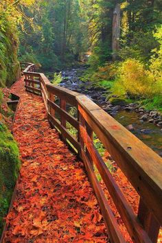 Fall leaves on Sweet Creek Trail in Mapleton, Oregon