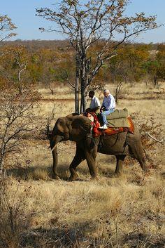 Zimbabwe Elephant Back Safari by Nomad Africa Adventure Tours, via Flickr