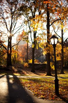 Fall, Central Park West, New York City.