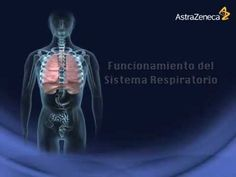 2R.-Funcionamiento del Sistema Respiratorio Tel 664-378-4817 - YouTube Cos, Health Care, Spanish, Youtube, Movie Posters, Human Body, Respiratory System, Science, Health