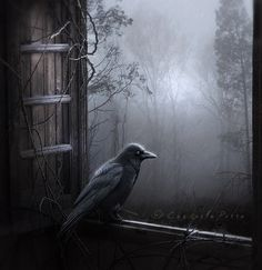"""""""But the raven, sitting lonely on the placid bust, spoke only That one word, as if his soul in that one word he did outpour. Nothing further then he uttered- not a feather then he fluttered - Till I scarcely more than muttered, """"other friends have flown before - On the morrow he will leave me, as my hopes have flown before."""" Then the bird said, """"Nevermore."""" ----quote from: The Raven by Edgar Allan Poe"""