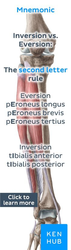 Pin our tips, guides, mnemonics and fact sheets and become an #anatomy master in no time!