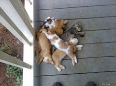 a pile of sleeping cats