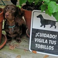 #perro #bravo