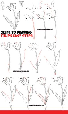 Flower Drawing Discover How to Draw Tulips - Easy Guide to Drawing Tulips from Side From Above and as Young Buds - How to Draw Step by Step Drawing Tutorials How to Draw Tulips - Guide to Drawing Tulips from Side From Above and as Young Buds Tulip Drawing, Painting & Drawing, Plant Drawing, Tulip Painting, Easy Flower Drawings, Flower Drawing Tutorials, Easy Drawings, Botanical Line Drawing, Botanical Drawings