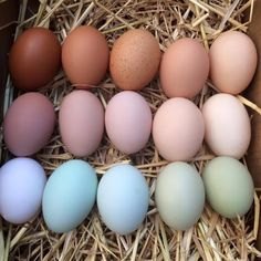 Great Fresh Chicken Eggs and Protein – Chicken In The Shadows Fresh Chicken, Chicken Eggs, Farm Chicken, Chicken Coops, Types Of Chickens, Raising Chickens, New Year Is Coming, Future Farms, Farms Living