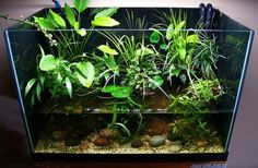 Aquascape Aquarium Design Ideas 33