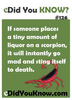 If someone places a tiny amount of liquor on a scorpion, it will instantly go mad and sting itself to death. http://edidyouknow.com/did-you-know-126/