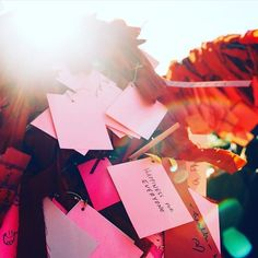 Great shot of the wishing tree at the   Crow Asian.. Chinese NewYear Festival...Dallas, Tx