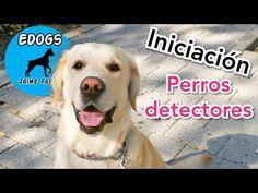 37 Ideas De Perros En 2021 Perros Mascotas Cosas Para Perros