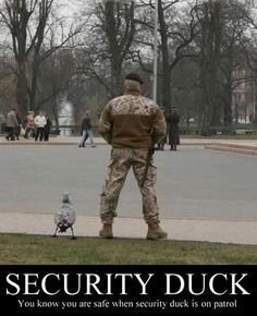 DUCKTECTIVE