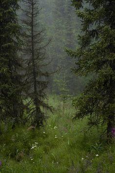 """""""Me encuentro con el paisaje.  Como hay un idioma materno que te enseña a nombrar las cosas..."""" (Julio Llamazares)."""