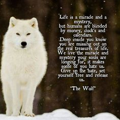 Is this just for the wild animal wolf or the wild in us; let the courage out if you've been mastering Taekwondo and you're sure of your self-control habits. OMG this is so beautiful and sad at the same time! Makes me wanna cry lets save the wolves. Animal Spirit Guides, Wolf Spirit Animal, Lone Wolf Quotes, Tier Wolf, Native American Quotes, Wolf Pictures, Wolf Photos, Wolf Love, Beautiful Wolves