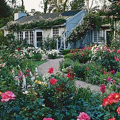 Roses - They're naturals in cottage gardens. Plant shrub roses among perennials, climbing types over arbors and against fences or walls.