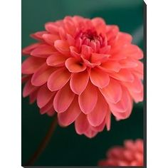 Coral flower--coral is my second favorite color...brown is my favorite