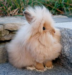 Fox and Bunny Store Fluffy Rabbit, Fluffy Cows, Fluffy Bunny, Fluffy Animals, Animals And Pets, Angora Bunny, Angora Rabbit, Cute Little Animals, Cute Funny Animals