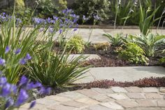 Edinburgh front garden - town & courtyard garden design - garden design portfolio - garden design edinburgh & scotland