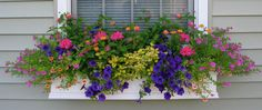 Shapes and Forms of Flowers for Window Boxes