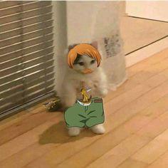By zzlyrus Gato Anime, Anime Cat, Funny Cat Wallpaper, Anime Animals, Cosplay, Mood Pics, Akatsuki, Cat Memes, Haikyuu