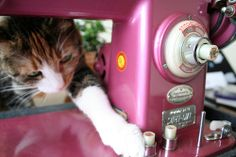 kitty wants to press buttons! by malisonian on Flickr.Push!