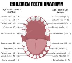 Why are primary teeth so important? Aren't they just going to fall out anyway? Primary or baby teeth serve several major purposes ina child's development. First, primary teeth are necessary for your child to learn to speak. In addition, they are necessary for proper chewing and eating. Finally, primary teeth provide space for the developing …