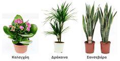 Plants, Gardening, Coffee, Google, Photography, Kaffee, Photograph, Lawn And Garden, Fotografie