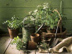 9 Healing Plants You Can Grow in Your Garden or Home . Herb Garden, Vegetable Garden, Terrace Garden, Modern Farmer, Growing Herbs, Clay Pots, Kraut, Fresh Herbs, Container Gardening