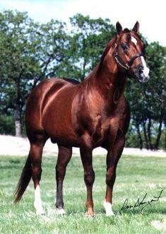 Freckles Playboy:  1973 AQHA sorrel stallion -- 1976 NCHA Futurity Reserve Champion; deceased   http://www.stoneys.org/images/stallions/frecklesplayboy.jpg