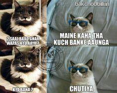 Top 37 Bakchod Billi Jokes, Memes Trolls | Free SMS Jokes on Mobile