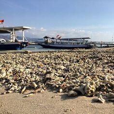 Loads if coral here on Gili T.. #upsticksandgo #travelphotos #travellingtheworld #coral #giliT #giliislands #gilitrawangan #beachphotos #islandlife #islandparidise #lombok #indonesia