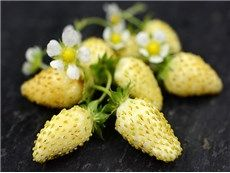 White Soul Alpine Strawberry. These are amazing. Expensive, but delicious.