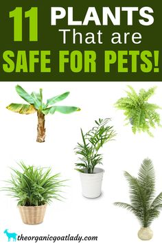 11 Plants That Are Safe For Pets, Houseplants Safe For Cats and Dogs, Indoor Plants Safe For Cats and Dogs, Non Toxic Plants For Cats and Dogs, Gardening Tips